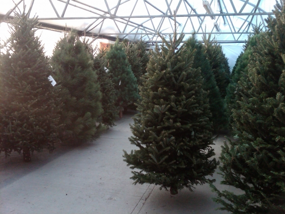 Thanksgiving At The Minot CVB Means A Lot Of Things But Today It Meant  Taking Our Annual Visit Out To Loweu0027s Garden U0026 Floral Center To Pick Up Our  Christmas ...
