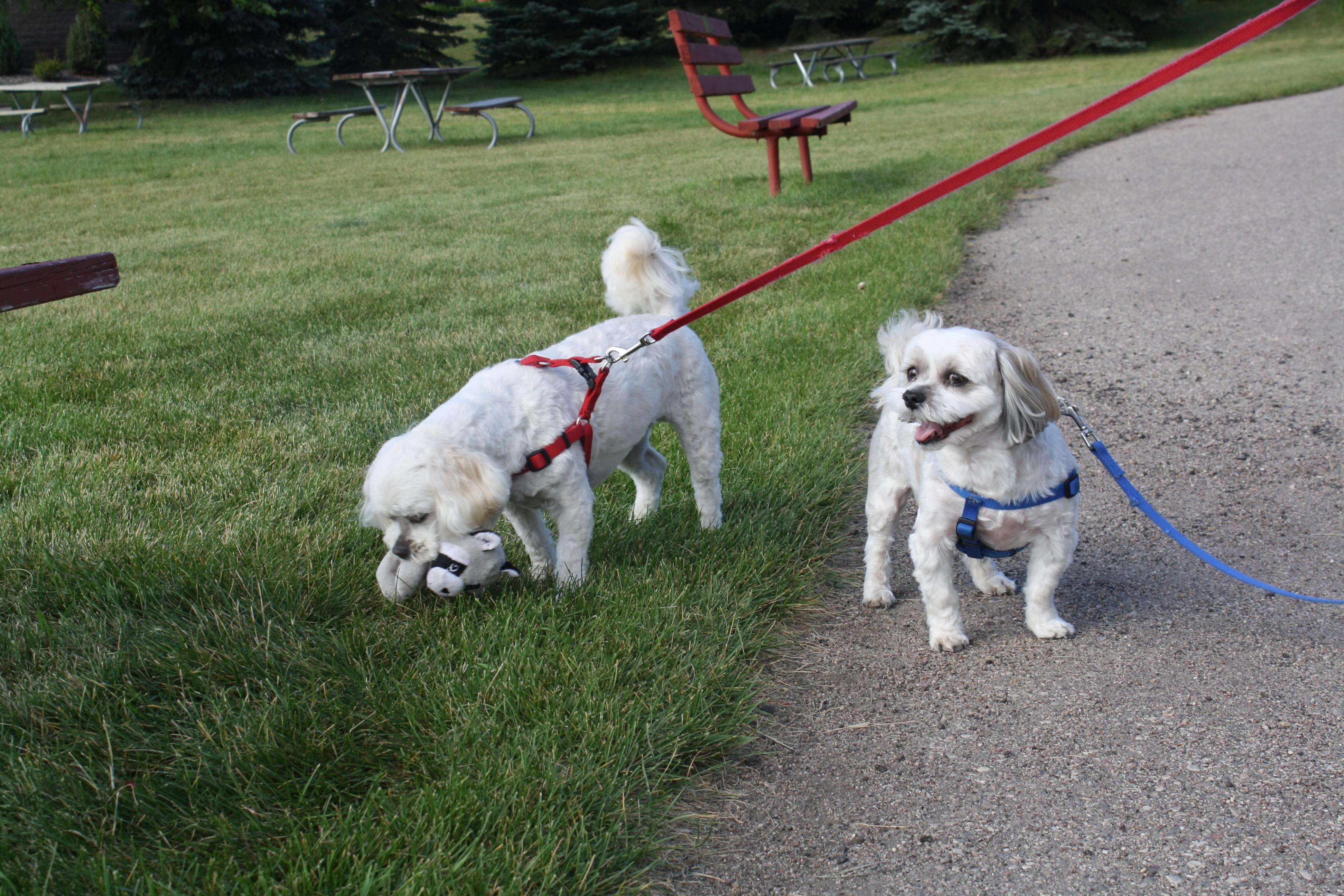 Cooper & Toby enjoying the Scandanavian Heritage Park