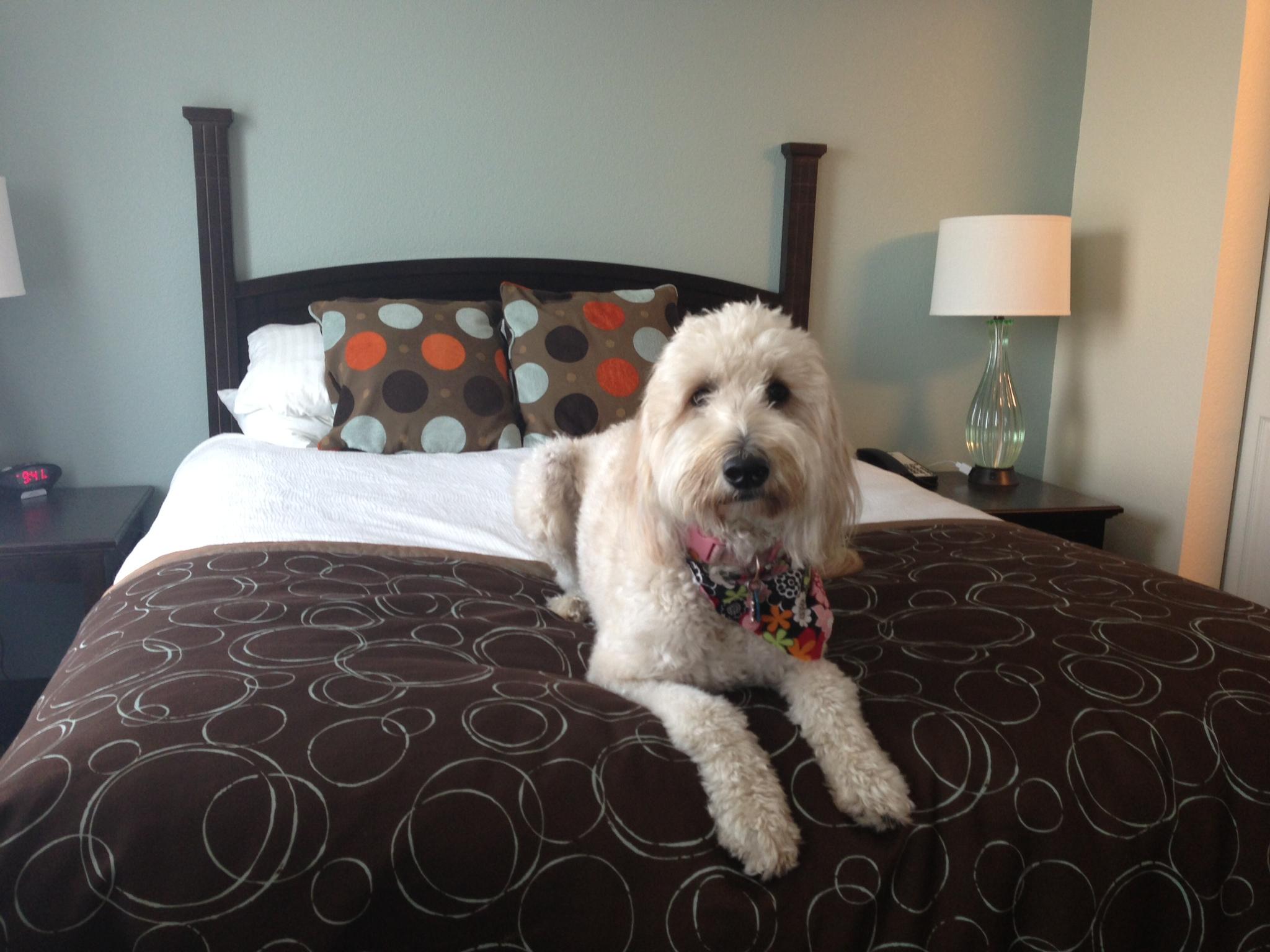 Fonzy at Staybridge Suites