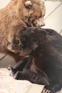 Bears - Photo credit to Amanda Cone